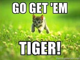 Go get em tiger- small kitty pic